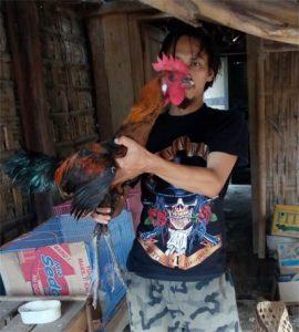 Kajian Ayam Pelung : Legenda, Ciri Khas & Cara Perawatannya